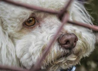 câine la adăpostul de câini Speranța