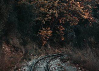 Șine de tren prin pădure