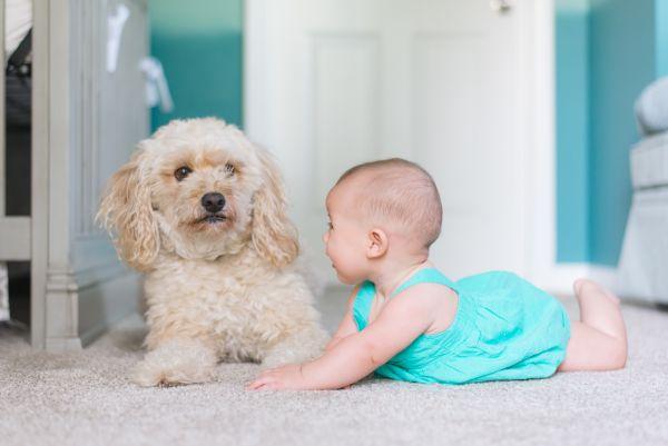 bebelus care sta pe covor langa un catel